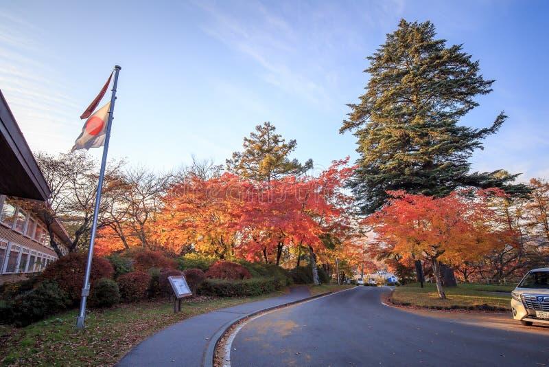 Hojas de otoño de la caída en árboles en Japón imagen de archivo libre de regalías