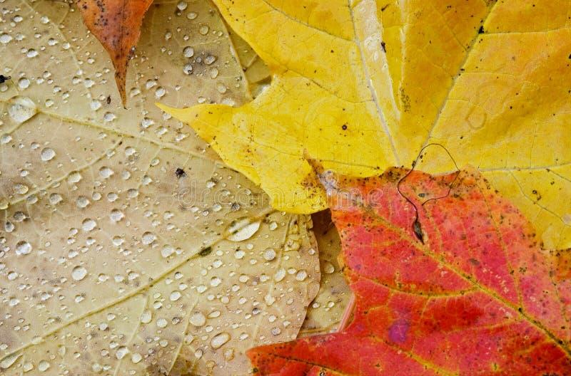 Hojas de otoño mojadas horizontales foto de archivo libre de regalías
