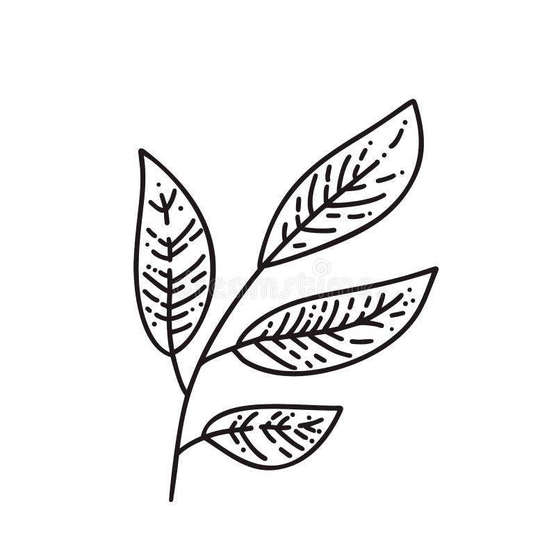 Hojas de otoño de Monoline del logotipo del árbol Emblema del esquema en estilo linear Icono del extracto del vector para el dise libre illustration