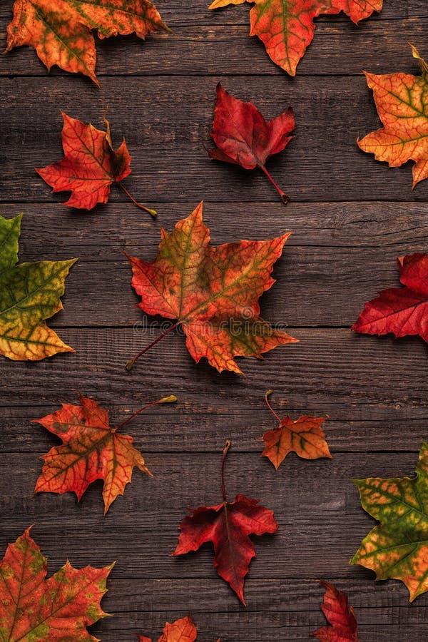 Hojas de otoño multicoloras hermosas fotografía de archivo