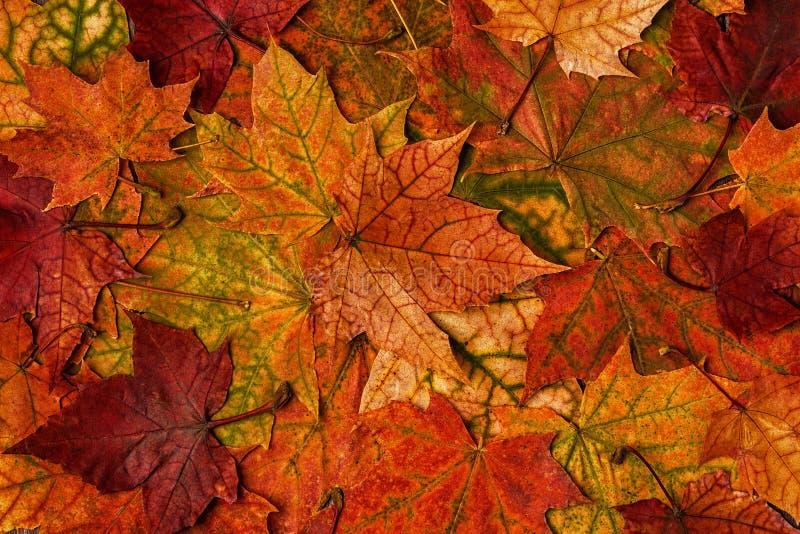 Hojas de otoño multicoloras hermosas imagen de archivo libre de regalías