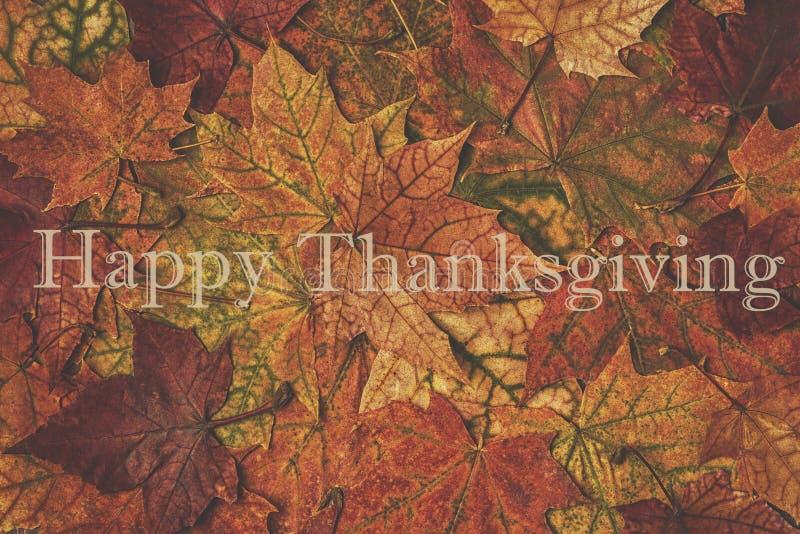 Hojas de otoño multicoloras hermosas imágenes de archivo libres de regalías