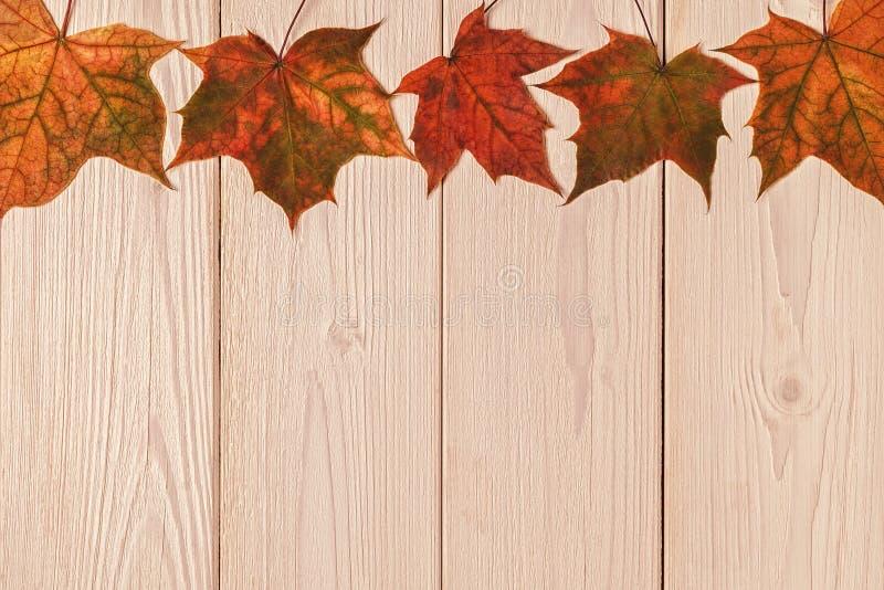 Hojas de otoño multicoloras hermosas imagenes de archivo