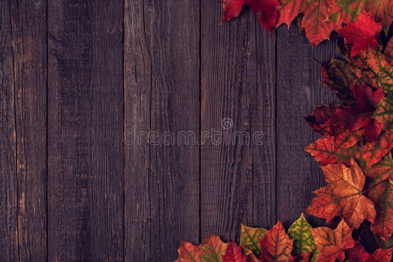 Hojas de otoño multicoloras hermosas foto de archivo