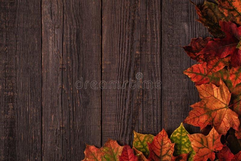 Hojas de otoño multicoloras hermosas fotografía de archivo libre de regalías
