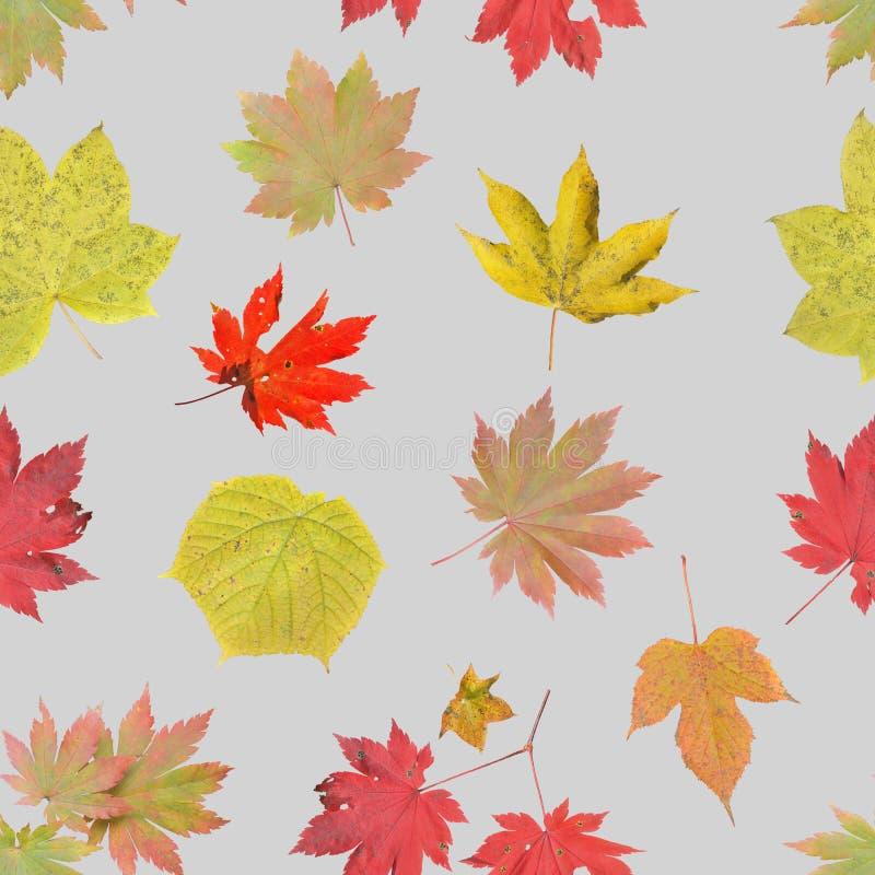 Hojas de otoño Patrón transparente imagen de archivo libre de regalías