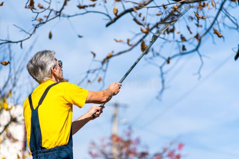 Hojas de otoño de perforación del hombre del árbol foto de archivo libre de regalías