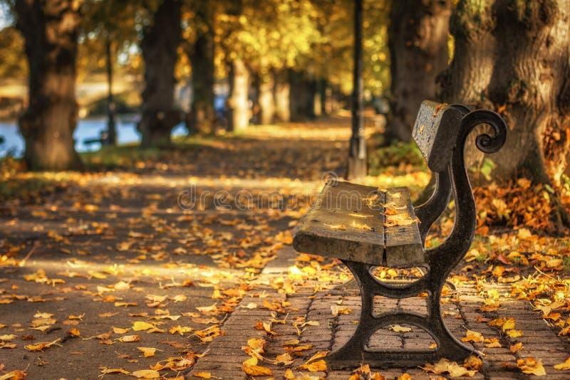 Hojas de otoño que caen en un banco en un parque en Evesham Worcestershire stock de ilustración