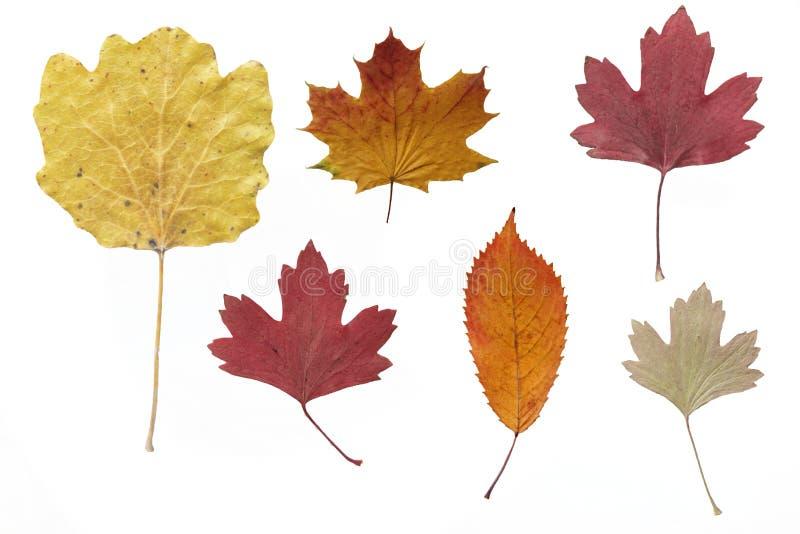 Hojas de otoño secadas fotos de archivo