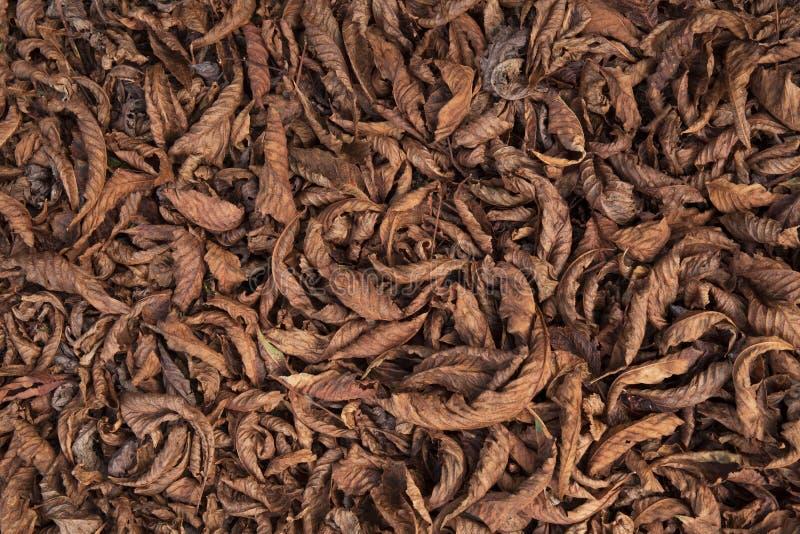 Hojas de otoño secas anaranjadas y colores marrones Primer Fondo Textura seca de las hojas en la tierra imagenes de archivo