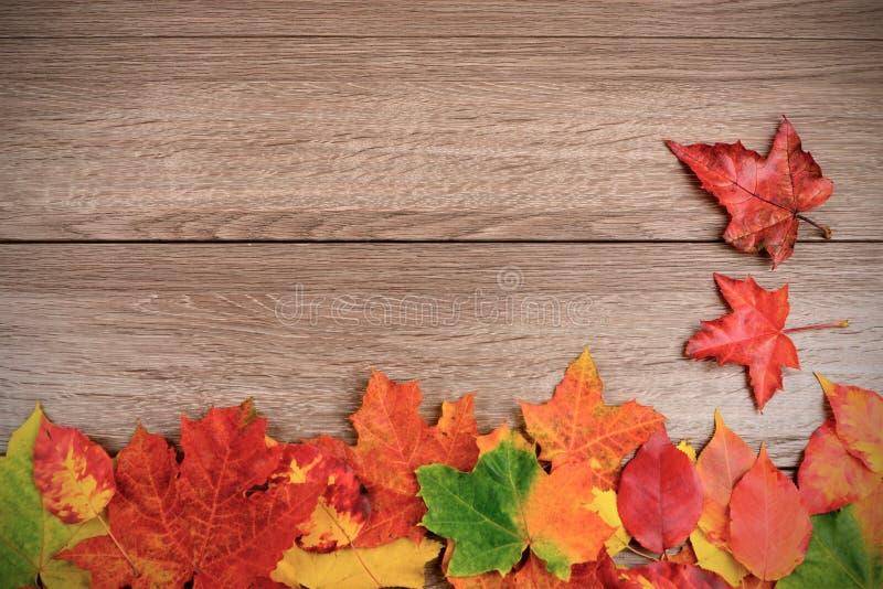Hojas de otoño sobre fondo de madera fotografía de archivo