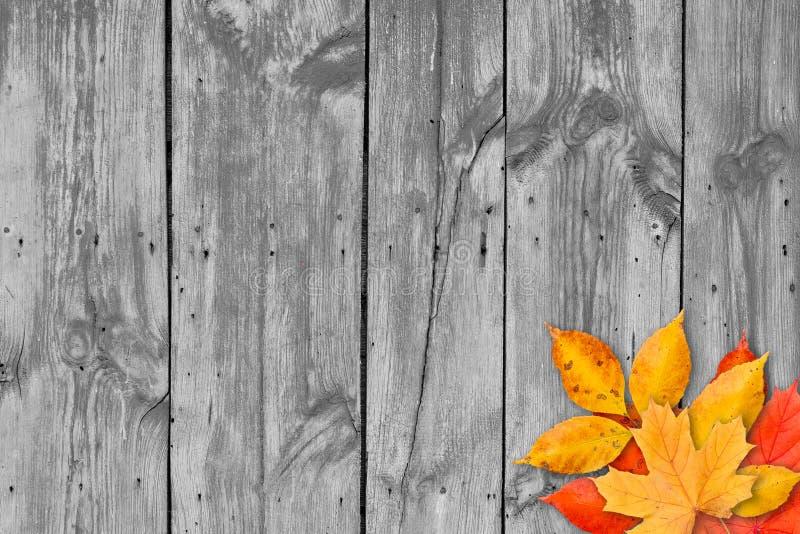 Hojas de otoño sobre fondo de madera. Copie el espacio.