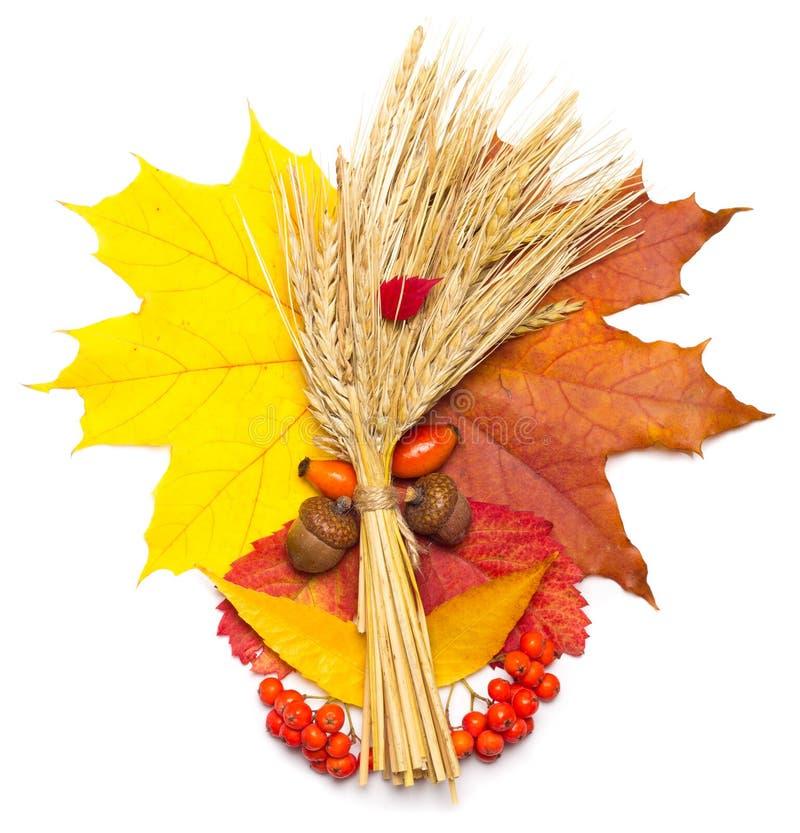 Hojas de otoño, trigo y bellota imagen de archivo