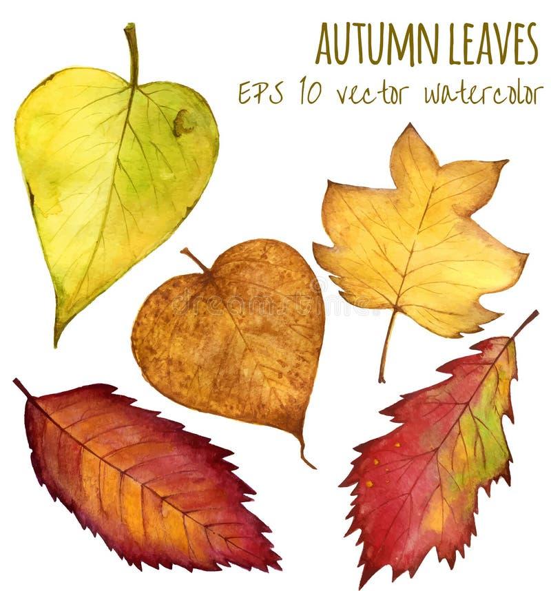 Hojas de otoño un color de agua en un fondo blanco stock de ilustración