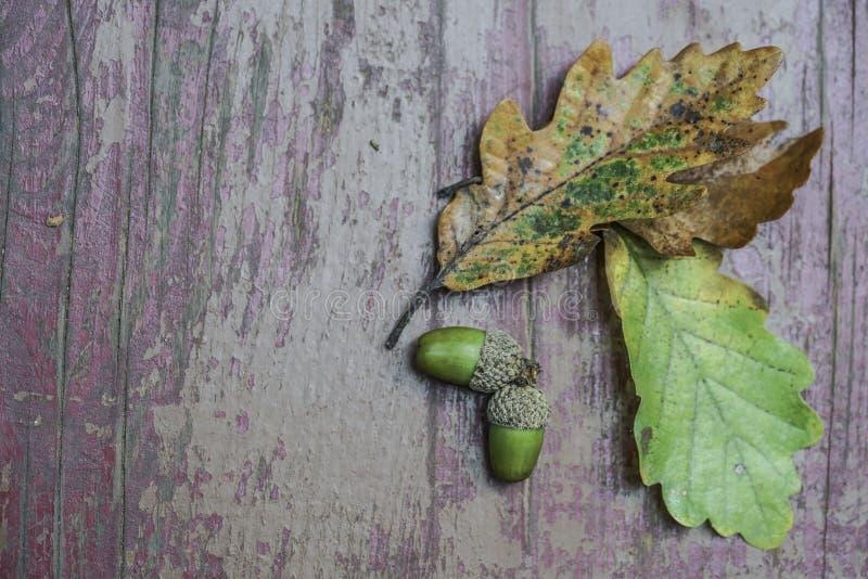 Hojas de otoño y bellota secadas en fondo de madera fotografía de archivo libre de regalías
