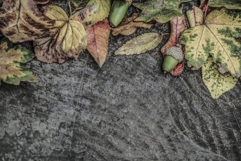 Hojas de otoño y bellota secadas en fondo de madera foto de archivo