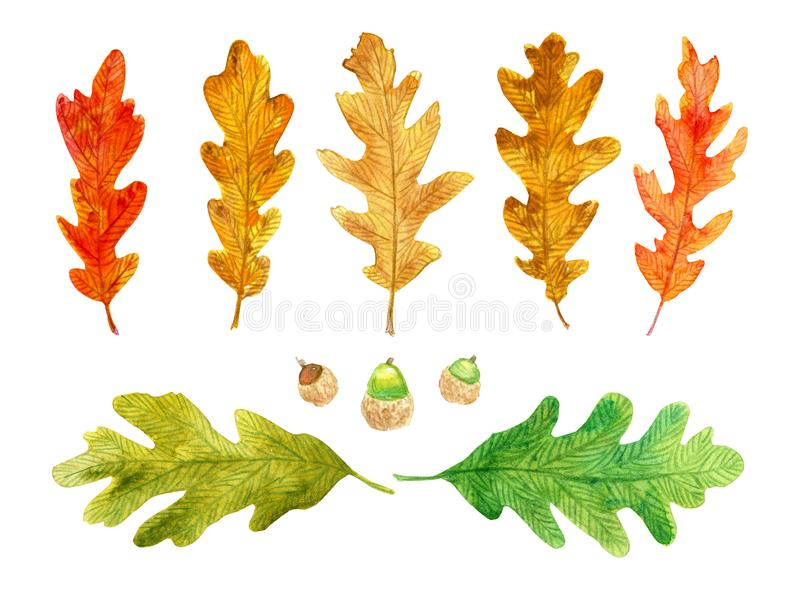 Hojas de otoño y bellotas aisladas acuarela stock de ilustración