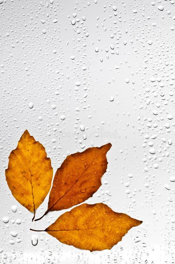 Hojas de otoño y gotas de agua coloridas en la ventana fotos de archivo libres de regalías