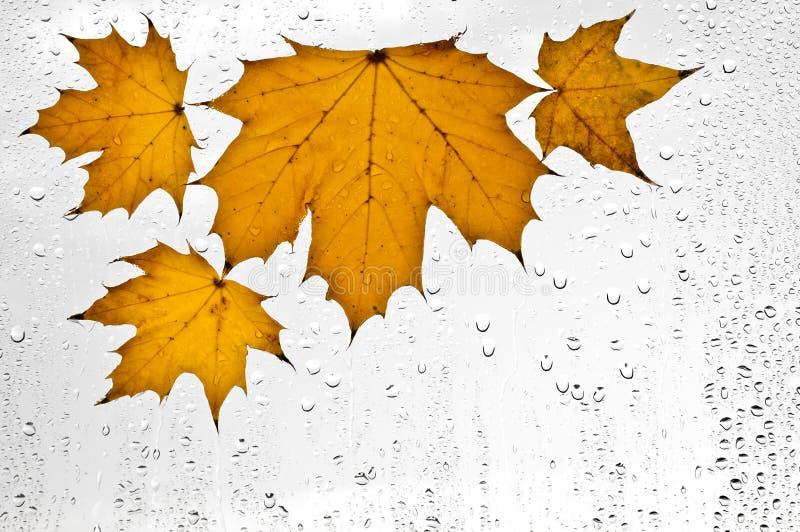 Hojas de otoño y gotas de agua coloridas en la ventana imágenes de archivo libres de regalías