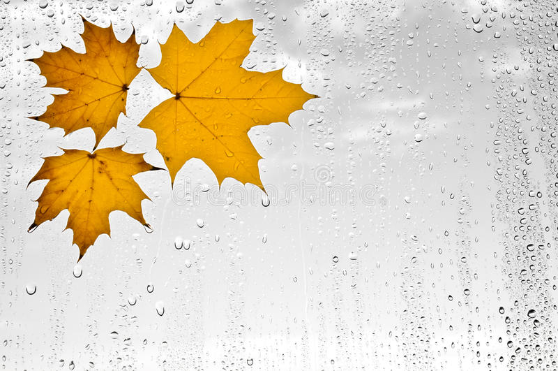 Hojas de otoño y gotas de agua coloridas en la ventana foto de archivo libre de regalías