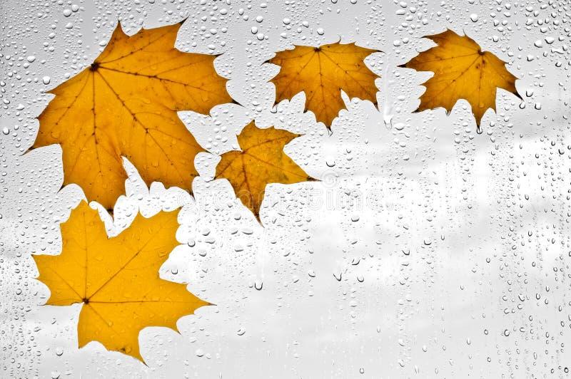 Hojas de otoño y gotas de agua coloridas en la ventana fotografía de archivo libre de regalías