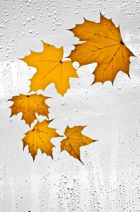 Hojas de otoño y gotas de agua coloridas en la ventana imagen de archivo libre de regalías