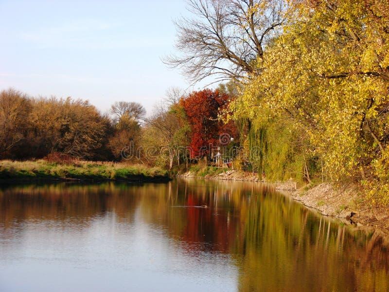Hojas de otoño y ramificaciones y reflexión foto de archivo