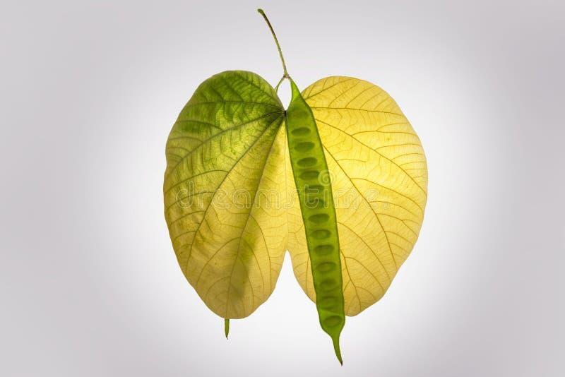 Hojas de otoño y verde y amarillo del símbolo del amor imagen de archivo