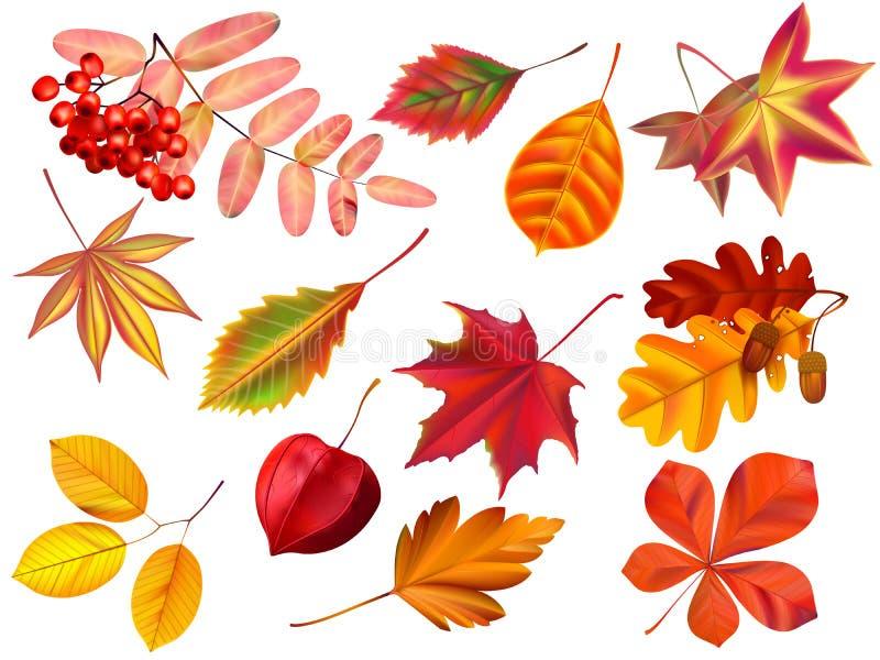 Hojas de oto?o del color Hojas caidas, hoja seca coloreada y sistema realista del vector de las hojas amarillas ilustración del vector