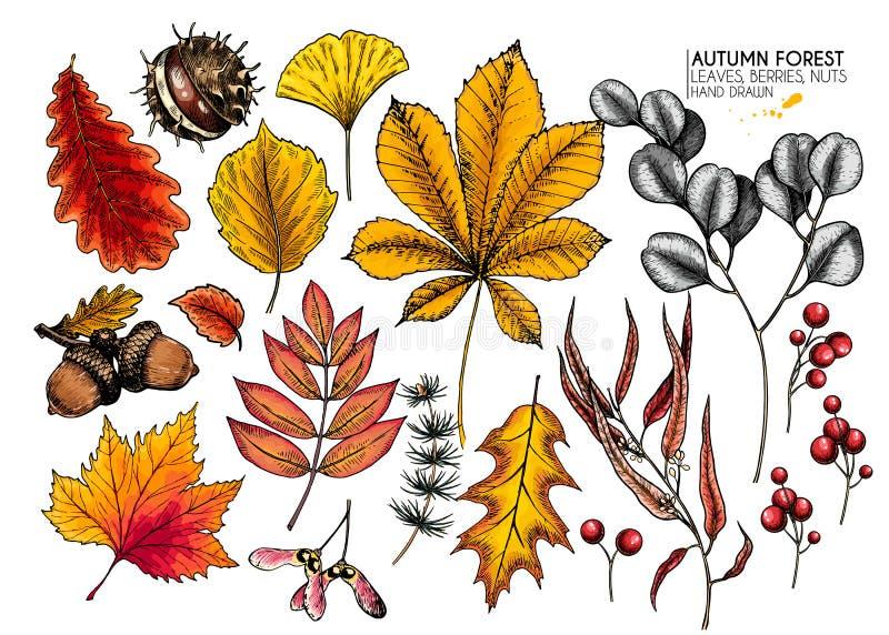 Hojas de oto?o dibujadas mano Iconos coloridos aislados vector de la hoja del árbol Folliage del bosque de la ca?da Arce, roble,  libre illustration