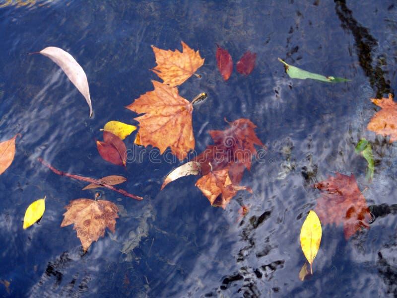 hojas de oto?o que flotan en el agua foto de archivo