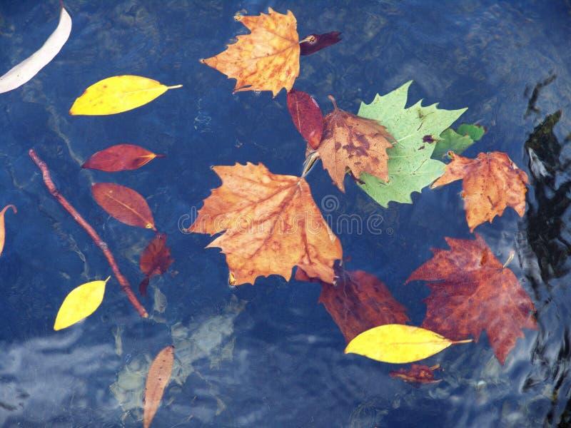 hojas de oto?o que flotan en el agua imagen de archivo