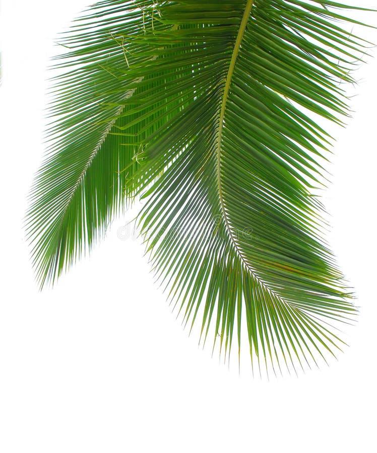Hojas de palma imagenes de archivo