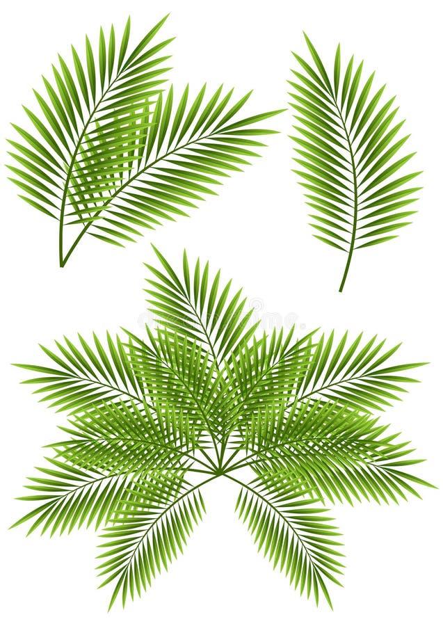 Hojas de palma stock de ilustración
