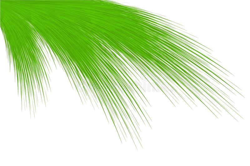 Hojas de palma libre illustration