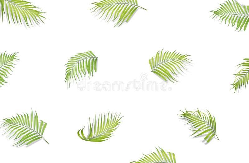 Hojas de palma aisladas en el fondo blanco Visión superior Endecha plana ilustración del vector