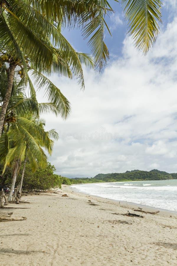 Hojas de palma de Playa Garza fotografía de archivo libre de regalías