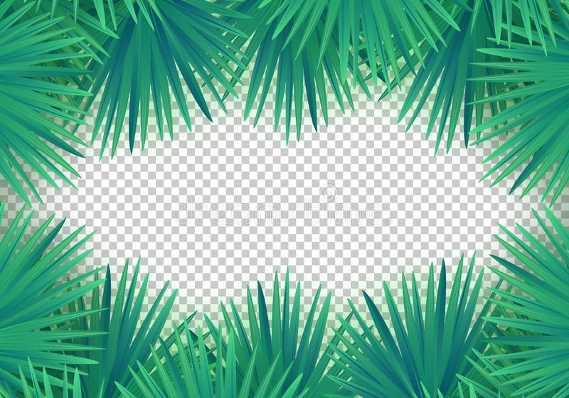 Hojas de palma del verano del vector en fondo transparente Marco tropical de moda libre illustration