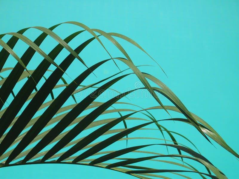 Hojas de palma elegantes contra el agua de la piscina de la turquesa foto de archivo libre de regalías