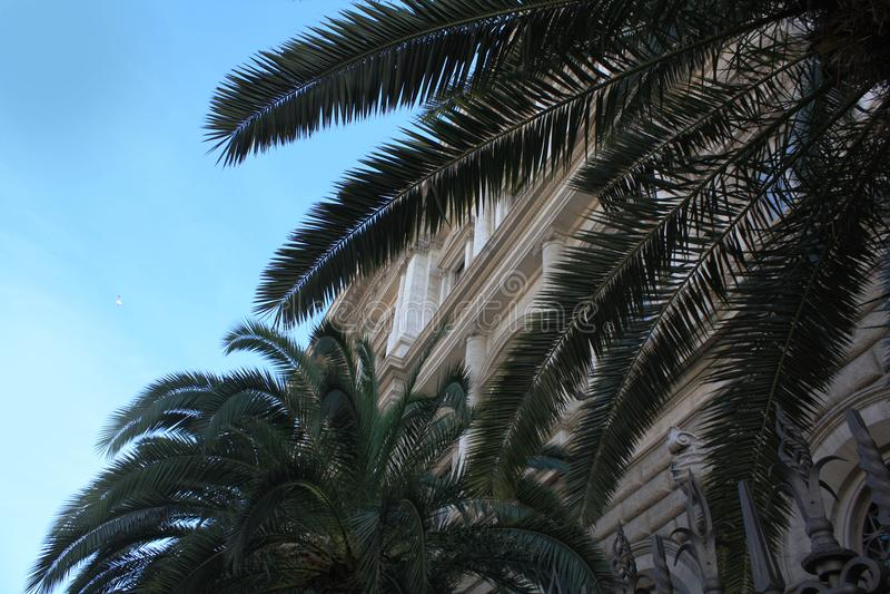 Hojas de palma en el fondo del cielo imágenes de archivo libres de regalías