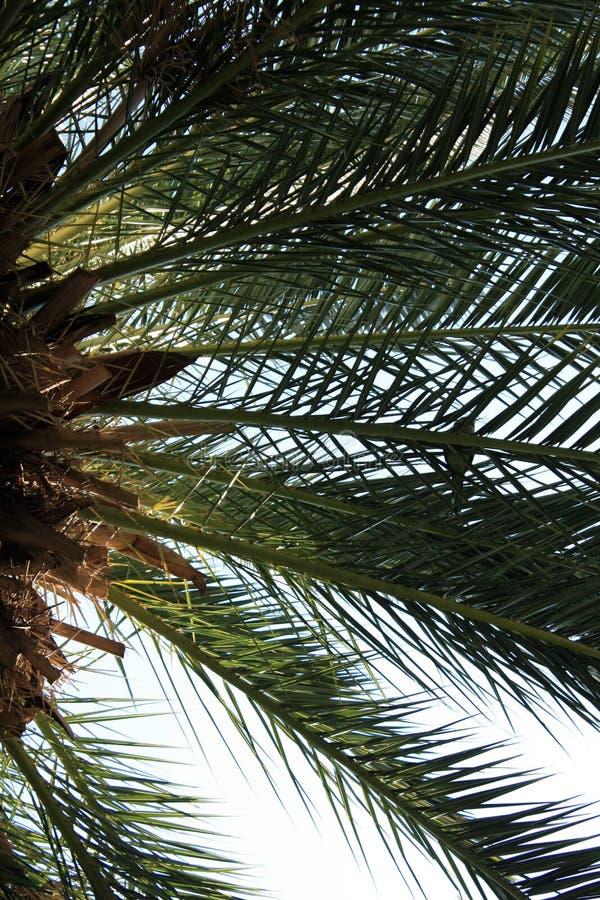 Hojas de palma en el fondo del cielo imagenes de archivo