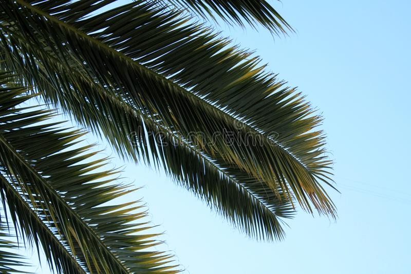 Hojas de palma en el fondo del cielo fotos de archivo libres de regalías