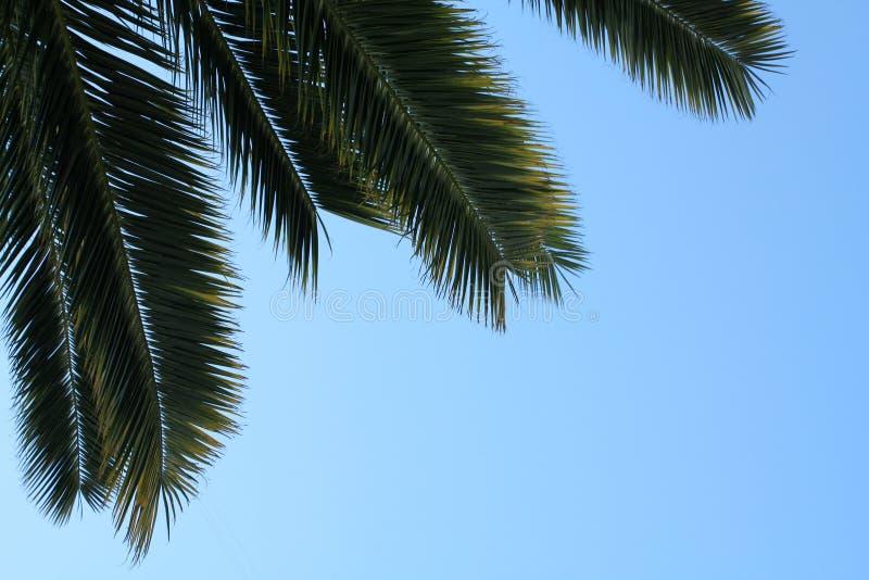 Hojas de palma en el fondo del cielo fotografía de archivo libre de regalías