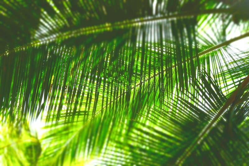 Hojas de palma - fondo natural verde abstracto con la falta de definición imagen de archivo libre de regalías