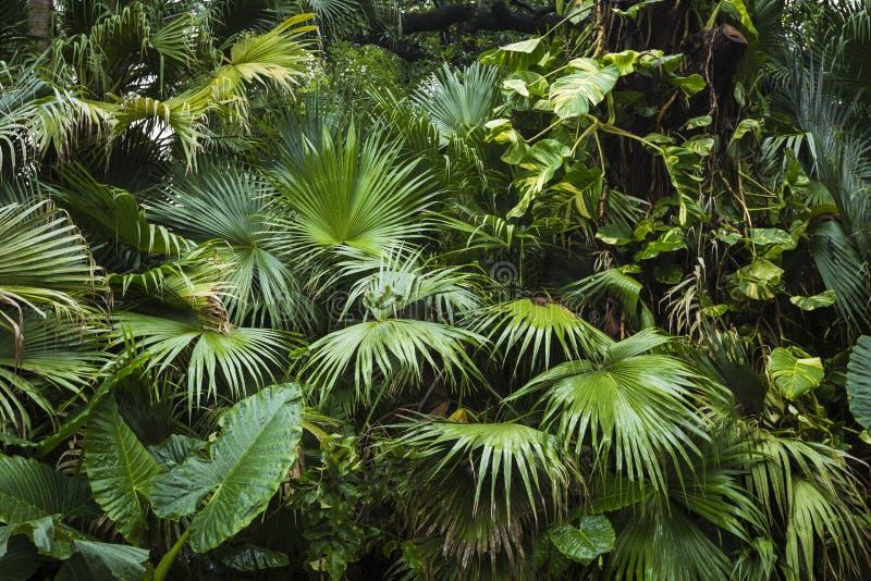 Hojas de palma hermosas del árbol en luz del sol imagen de archivo