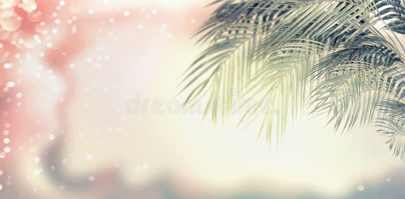 Hojas De Palma, Sol Y Bokeh Del Verano En Color En Colores Pastel ...