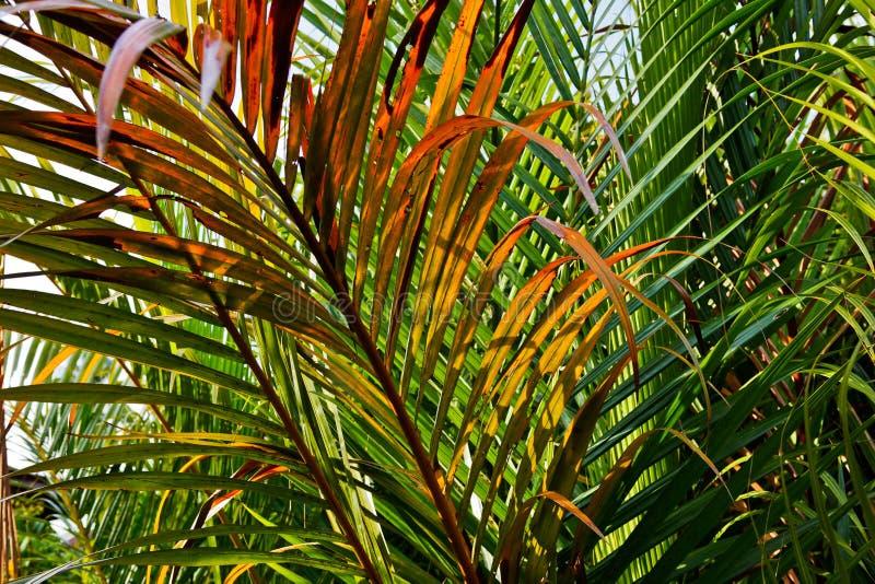 Hojas de palma tropicales fotos de archivo libres de regalías
