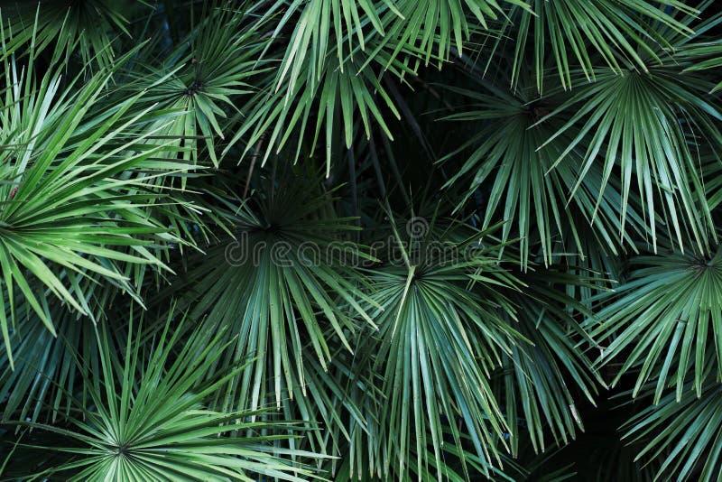 Hojas de palma tropicales con la luz del sol, fondo del estampado de flores foto de archivo libre de regalías