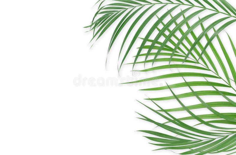 Hojas de palma tropicales en el fondo blanco Naturaleza mínima Verano ilustración del vector