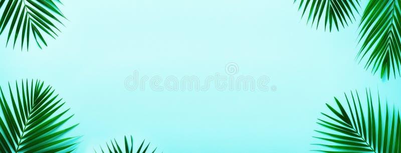 Hojas de palma tropicales en fondo en colores pastel de la turquesa Concepto mínimo del verano Endecha plana creativa con el espa fotos de archivo